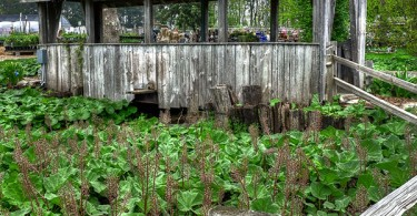 Midwest Gardening To Do List for Spring