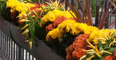 New England Gardening To Do List for Fall