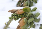 The Winter Gardener - Gift Ideas for Winter